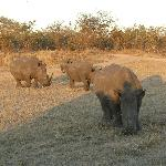 The Big Five Plus Plenty of Rhino's