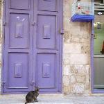all kitty in the old city