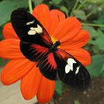 Come and enjoy our exotic butterflies and plants