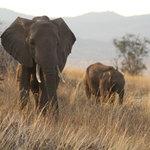 Lumo - Elephant