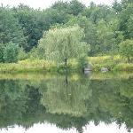 L'étang qui se situe derrière l'auberge
