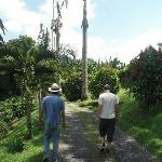 Tour through the coffee farm