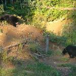 chouette des ours !!!
