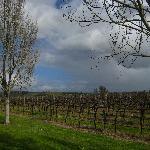 Vines are barren in winter!