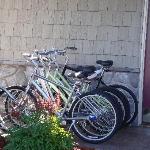 Trek Bikes (free)