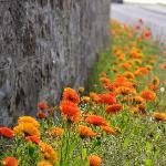 Flowers along sea wall