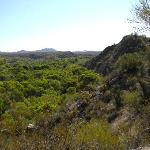 looking back across the riparian area of the Hassayampa River towards Wickenburg