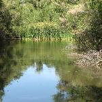 the big pond at the Hassayampa River Preserve