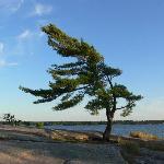 My Favourite Tree !
