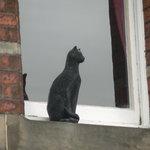 Photo de York Cat Trail