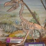 """Paleontological Museum """"Egidio Feruglio"""" (MEF)"""