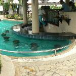 The Waves Pool Bar