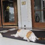 ホテルの入り口の可愛い犬