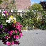 Avlon House Bed & Breakfast part of Garden