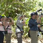 Costa Rica Birding Journeys photo tour clients