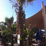 so traurig wie diese Palme, schaut das ganze Hotel aus!!!