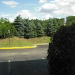 View from room; roadway directly behind trees