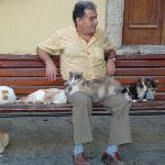 Cat lover in Kos town