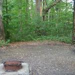 Site 207