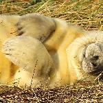 Seals 12