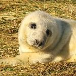 Seals 10