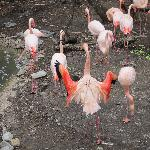 awesome flamingos