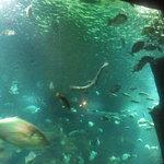 Aquarium Madeira 1