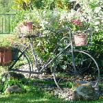 la biciplantas