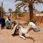 inicio do percurso para as dunas em dromedarios