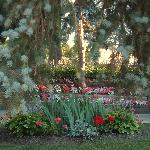 View of the gardens from the patio.