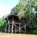Bukit Melapi in Kinabatangan