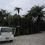 Parking area and neat NZ vegetation!