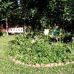 Back-yard garden