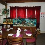 Enjoy our saltwater fish tanks