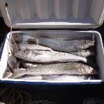 Whiting heaven
