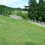 六甲牧場の一部