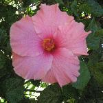 Un esempio dei bellissimi fiori di cui è pieno il residence