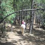 riding under pine trees