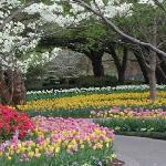 Enjoy the beauty of the Dallas Arboretum.