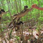lemuri a nosy tanikely