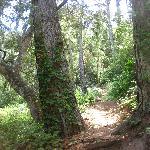 Magical Hike