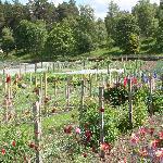 Balmoral gardens