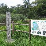 三宝寺池は国の天然記念物に指定されている