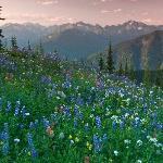 Experience awe-inspiring mountain views
