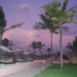 La plage et les palmiers
