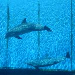 immancabile visita all'acquario di Genova
