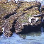 Harbor Seal at Quarry Cove