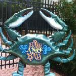 Right next door a dancing crab in the sun!