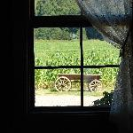 Through the window...inside looking out...rustic but elegant all the same.