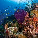 Here you'll find some of the most spectacular and protected coral reefs in the Indo-Pacific.